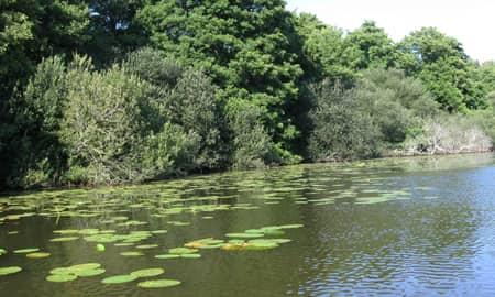 Parcours no-kill black-bass sur l'étang de Laprade