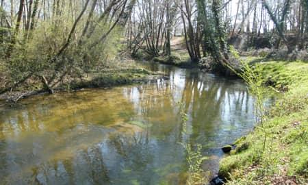 Vue du parcours no-kill truite de Courlis