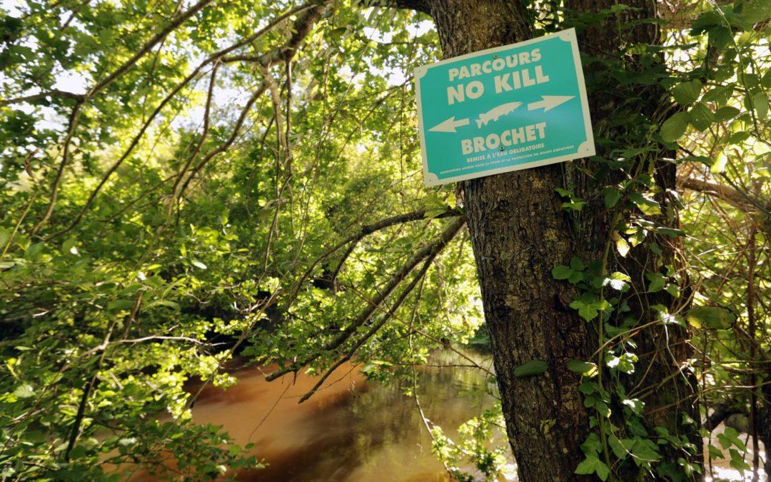 Mise en place de parcours no-kill pour le brochet et la truite fario
