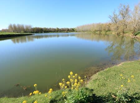 Paysage de l'étang de Nerbis