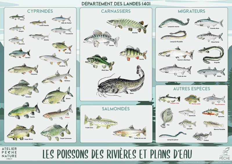 Poster des poissons des Landes