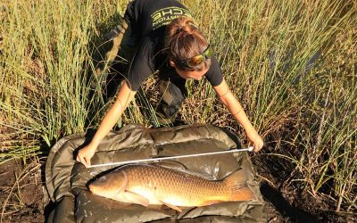 Mise en place de suivis par carnet de captures pêcheurs : carnassiers et carpe
